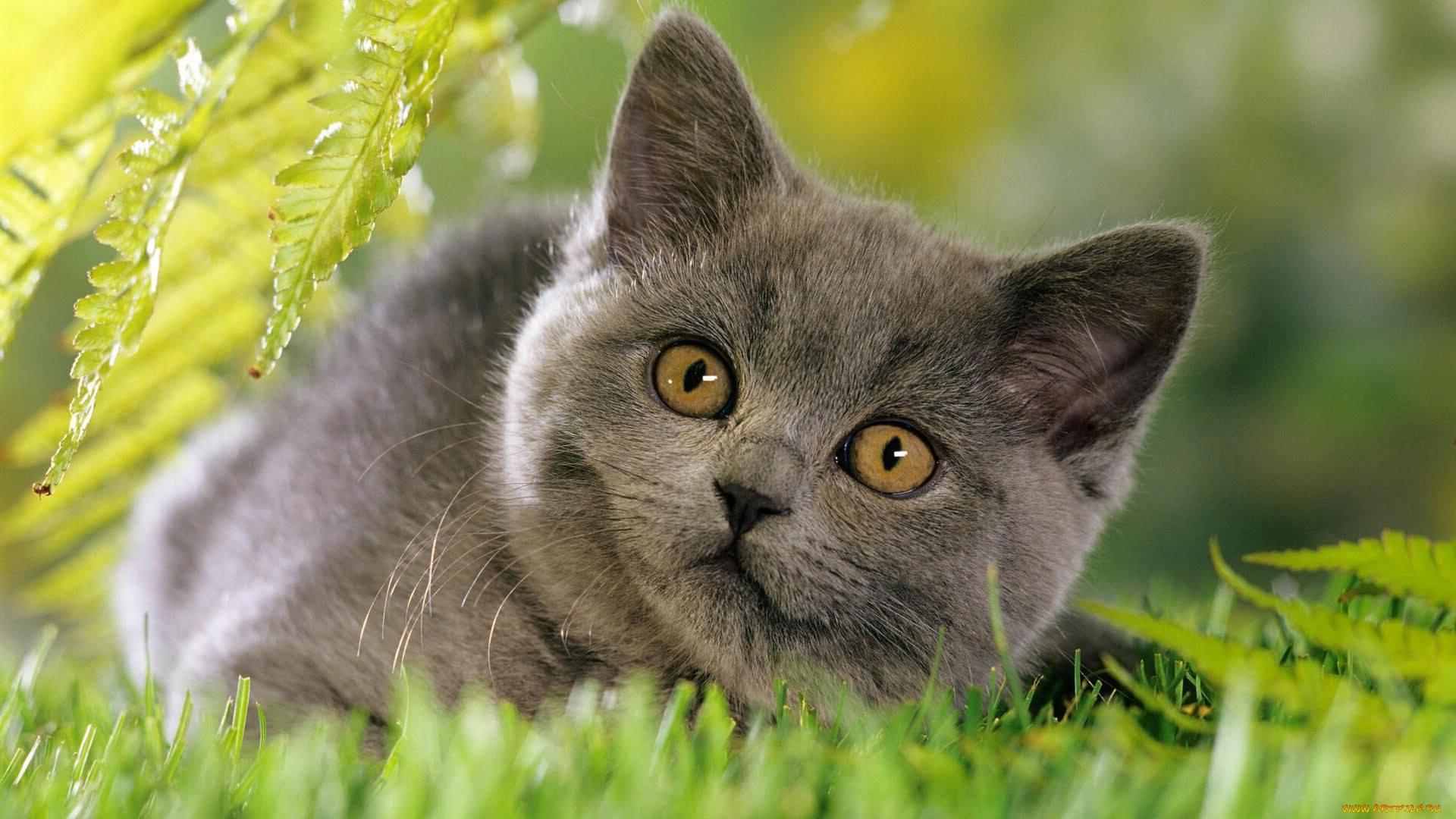 Картинка на заставку котик